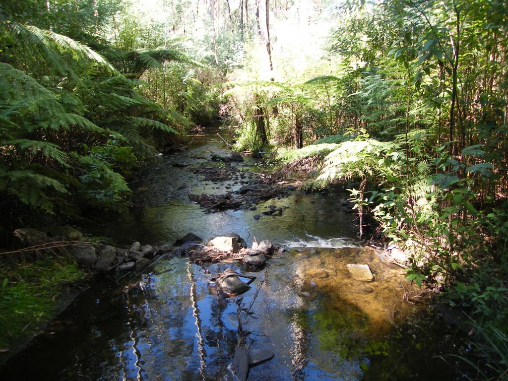 Stream Maroondah Catchment